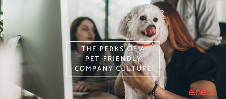 The perks of a Pet-Friendly Company Culture
